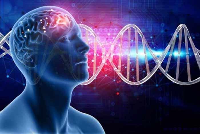 brain development related factors