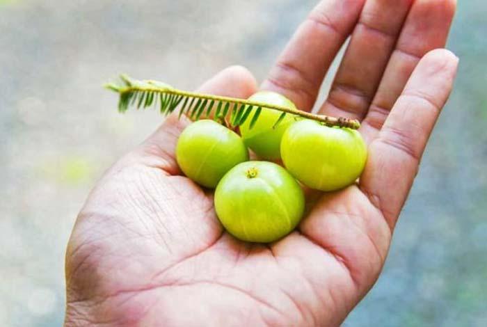 indian gooseberry