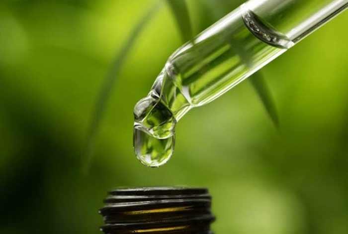 know cbd cbd oil and its derivative