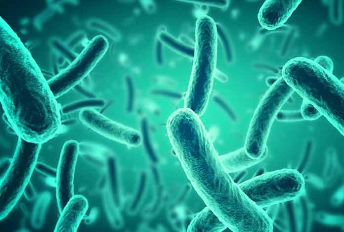 Probiotics For Medicine for Antiaging & Regeneration
