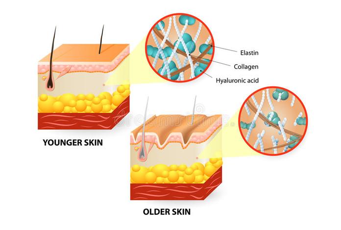 Collagen as an Antiaging Supplement