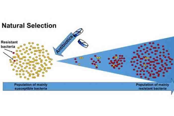 science behind the drug resistance