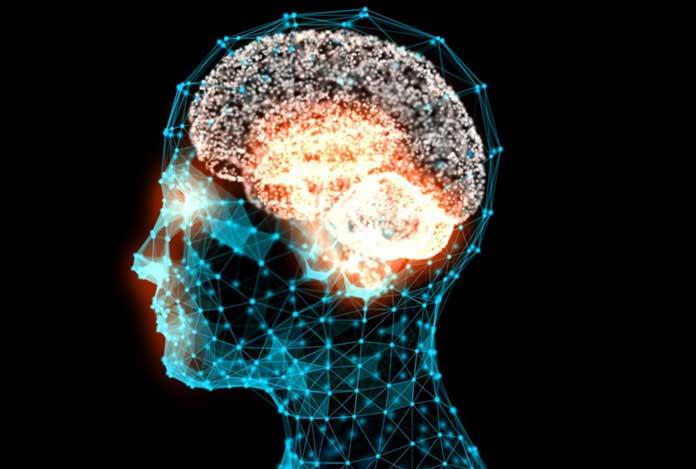 Effects of Estrogen on the Brain