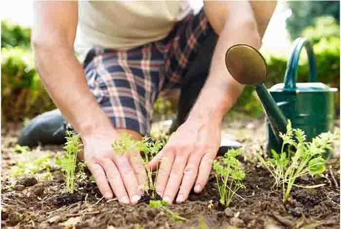 boost brain health with gardening