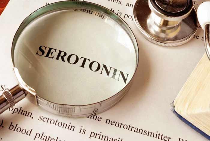 amazing role of serotonin in learning