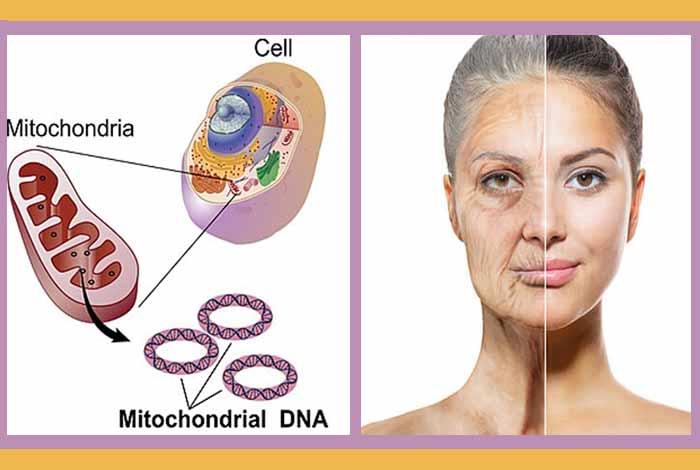 wrinkles and hair loss