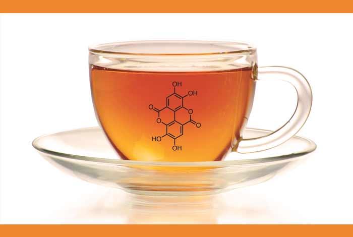 black tea has theaflavins