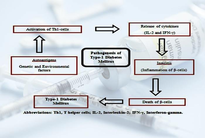 Anti-Insulin Receptor Antibodies