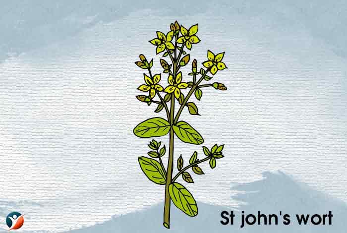 St. John's Wor